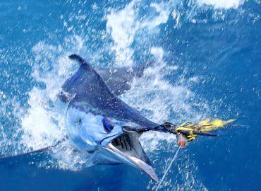 Marlin 2